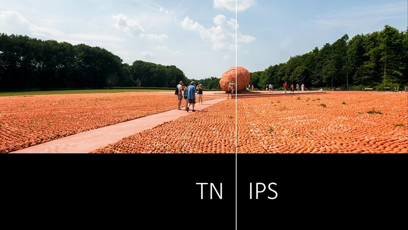 TN Panel vs IPS: a Comparison